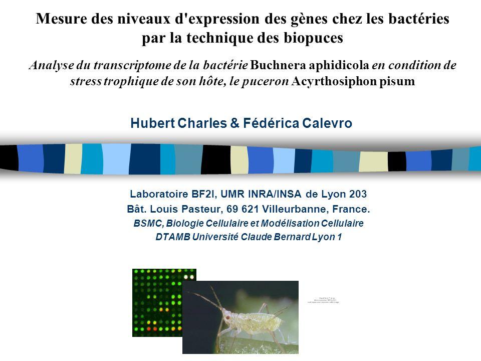 Mesure des niveaux d expression des gènes chez les bactéries par la technique des biopuces Analyse du transcriptome de la bactérie Buchnera aphidicola en condition de stress trophique de son hôte, le puceron Acyrthosiphon pisum