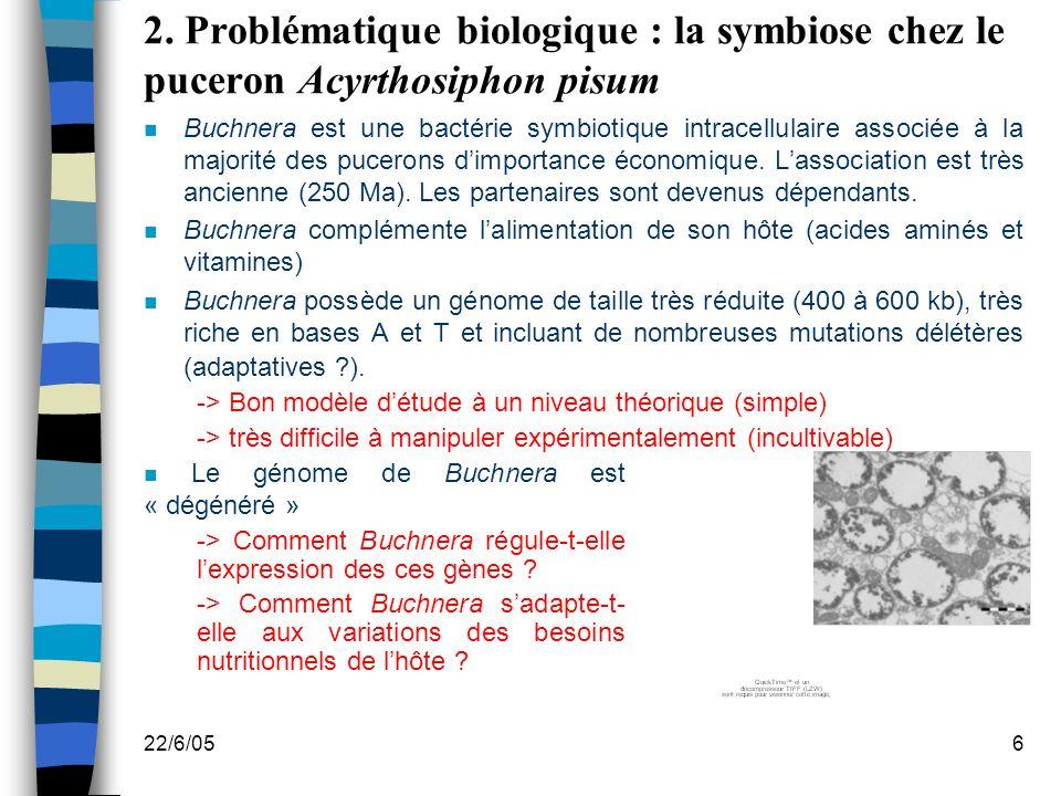 2. Problématique biologique : la symbiose chez le puceron Acyrthosiphon pisum
