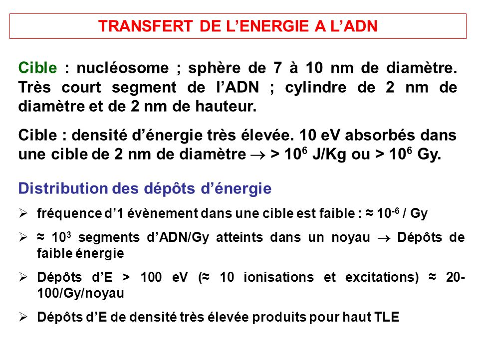 TRANSFERT DE L'ENERGIE A L'ADN