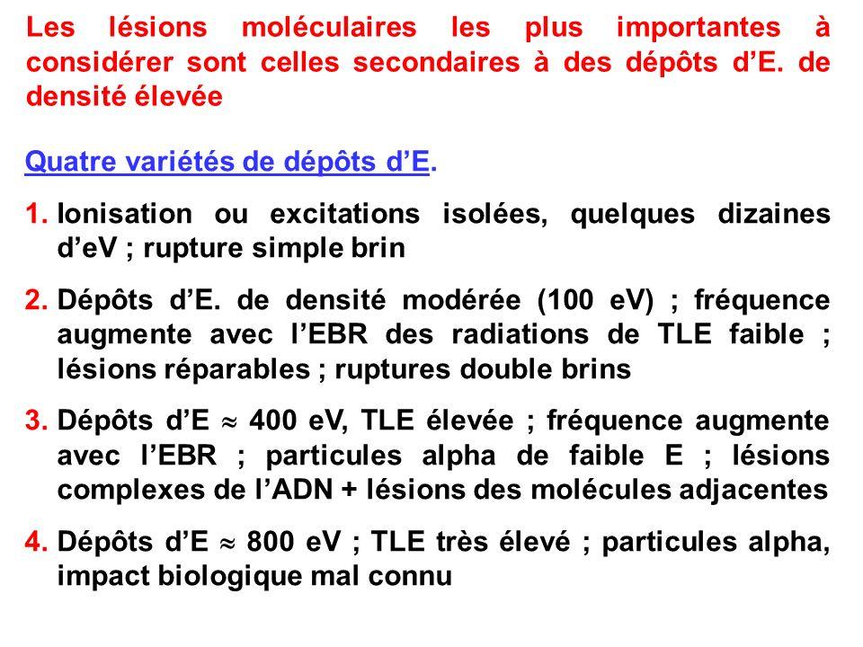Les lésions moléculaires les plus importantes à considérer sont celles secondaires à des dépôts d'E. de densité élevée