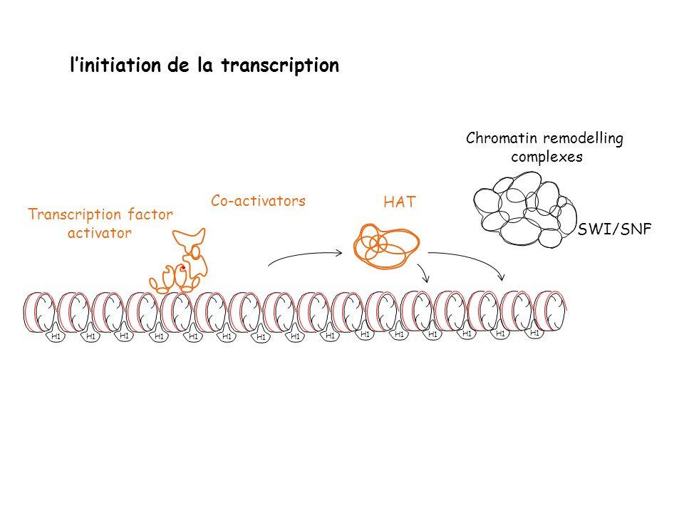 Chromatin remodelling