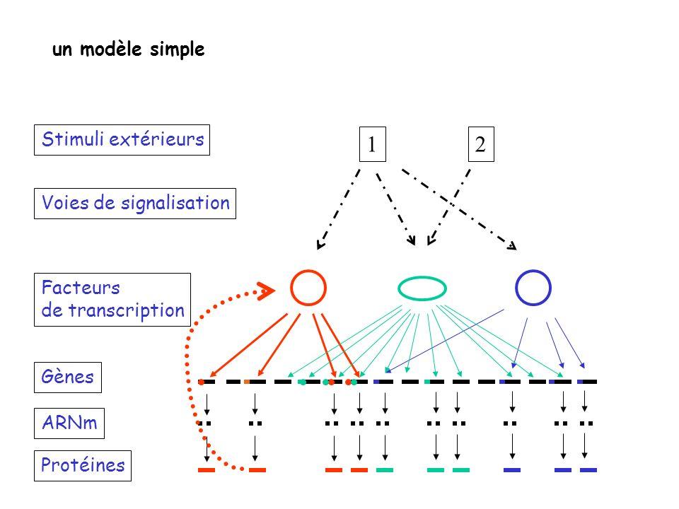 1 2 un modèle simple Stimuli extérieurs Voies de signalisation
