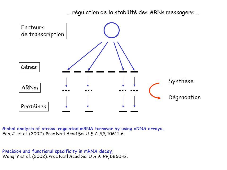 … régulation de la stabilité des ARNs messagers …