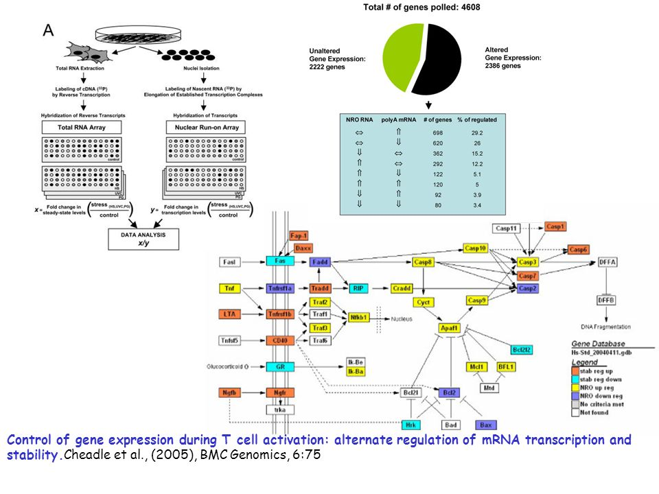Control of gene expression during T cell activation: alternate regulation of mRNA transcription and stability.Cheadle et al., (2005), BMC Genomics, 6:75