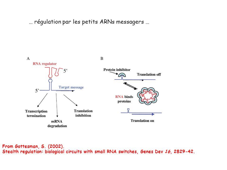 … régulation par les petits ARNs messagers …