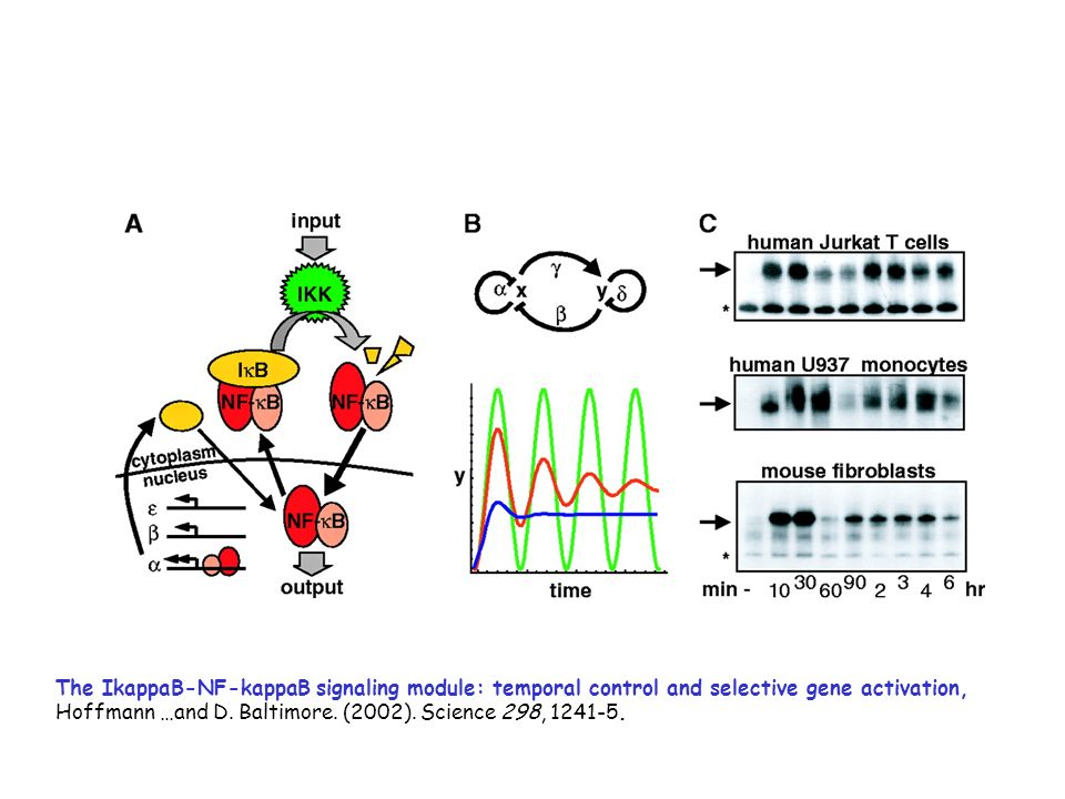 The IkappaB-NF-kappaB signaling module: temporal control and selective gene activation,