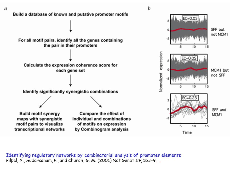 Identifying regulatory networks by combinatorial analysis of promoter elements