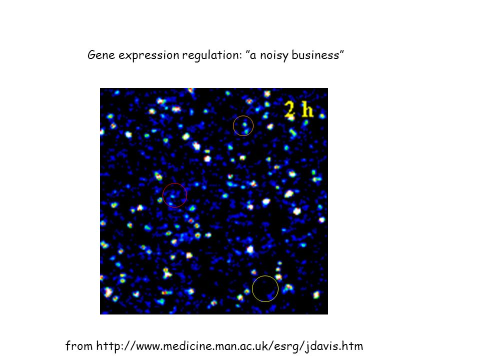 Gene expression regulation: a noisy business