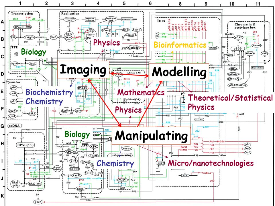 Imaging Modelling Manipulating Physics Bioinformatics Biology