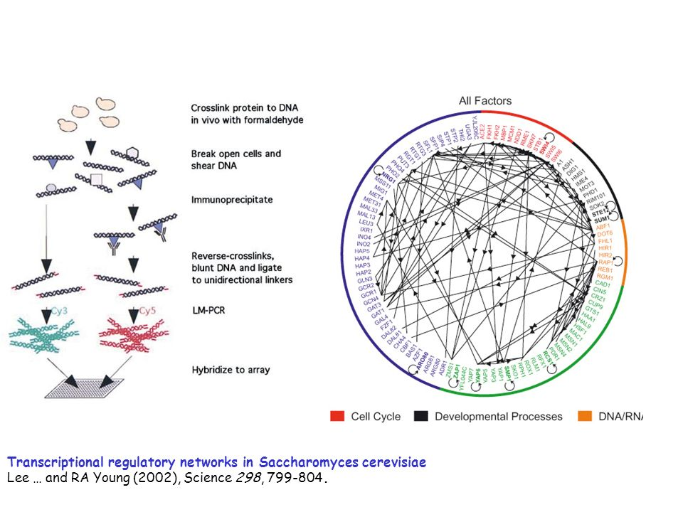 Transcriptional regulatory networks in Saccharomyces cerevisiae
