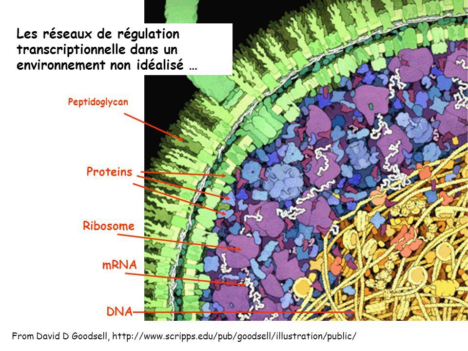 Les réseaux de régulation transcriptionnelle dans un environnement non idéalisé …
