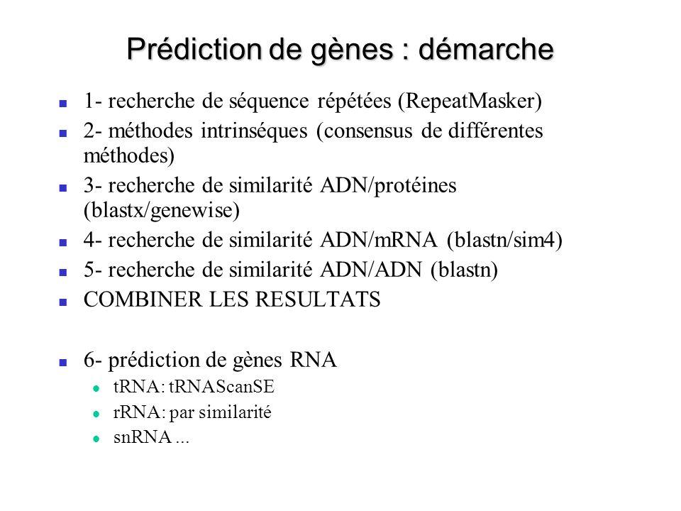Prédiction de gènes : démarche