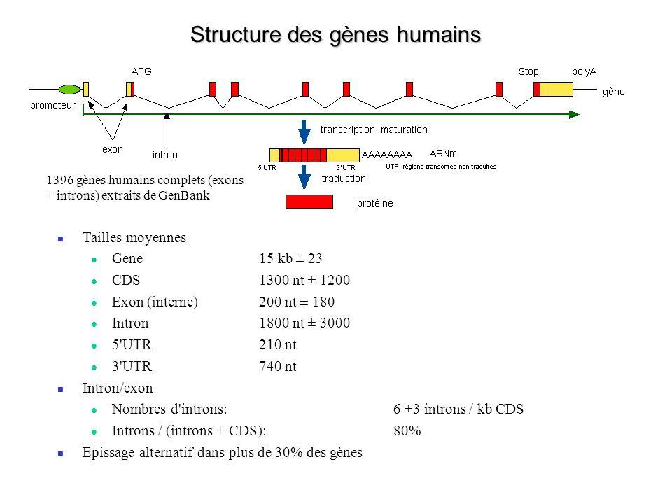 Structure des gènes humains