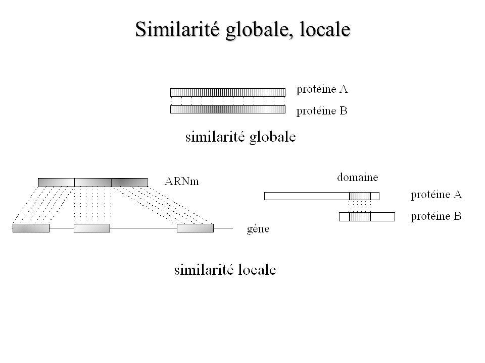 Similarité globale, locale