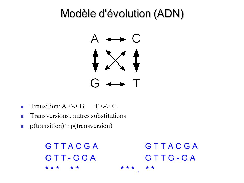 Modèle d évolution (ADN)