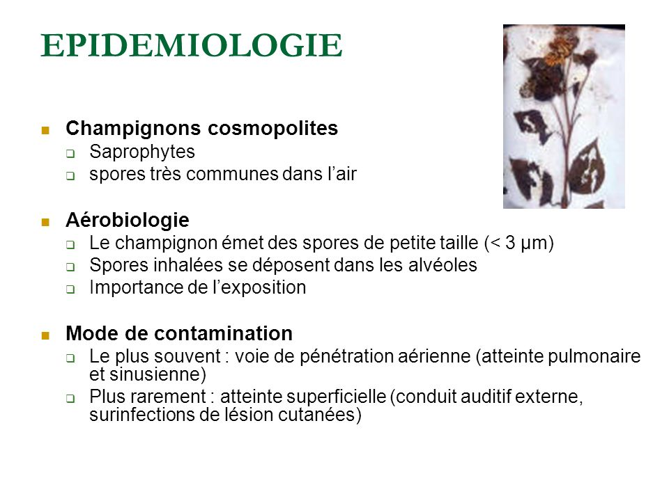 EPIDEMIOLOGIE Champignons cosmopolites Aérobiologie