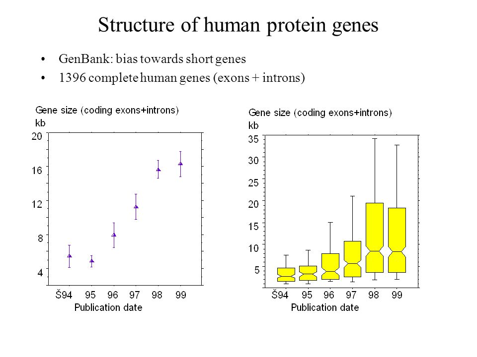 Structure of human protein genes