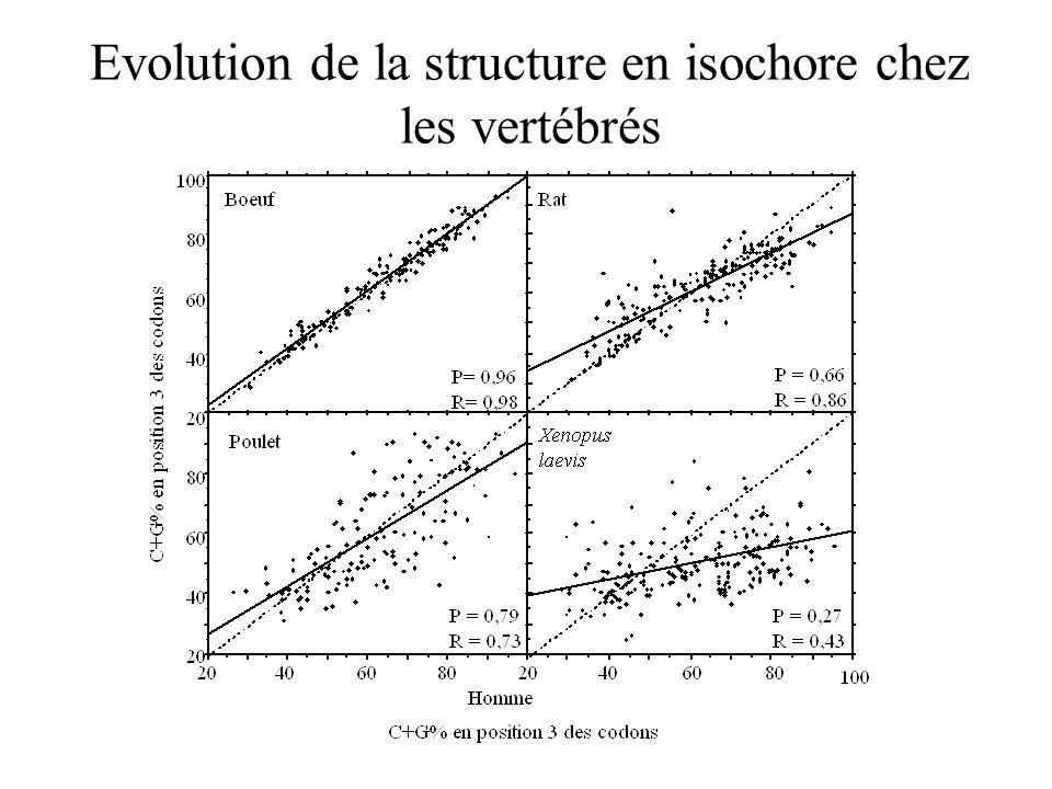 Evolution de la structure en isochore chez les vertébrés