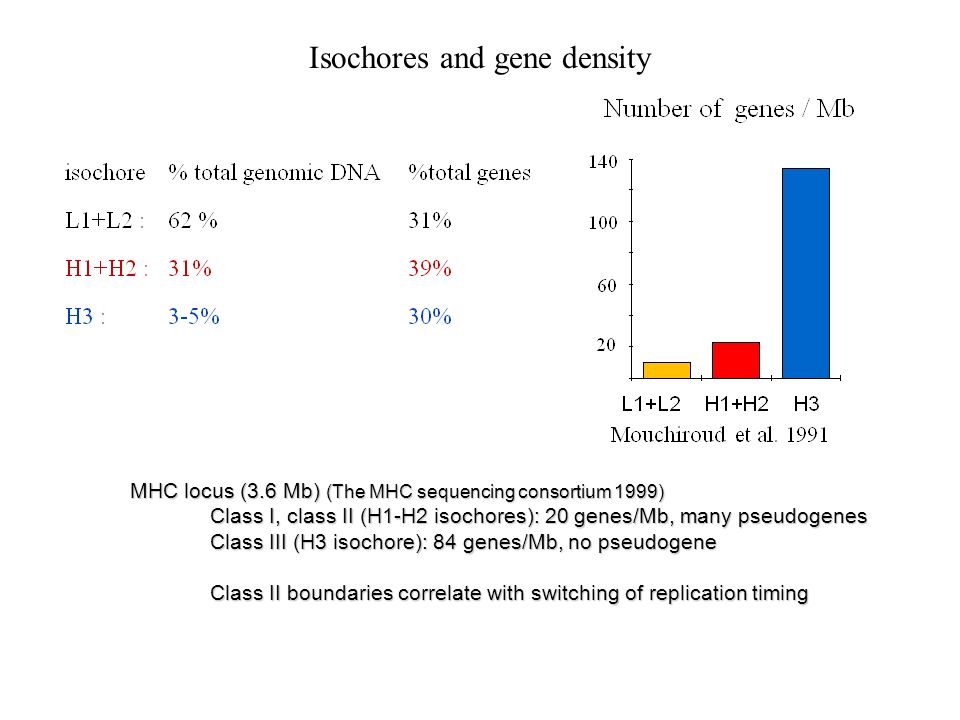 Isochores and gene density