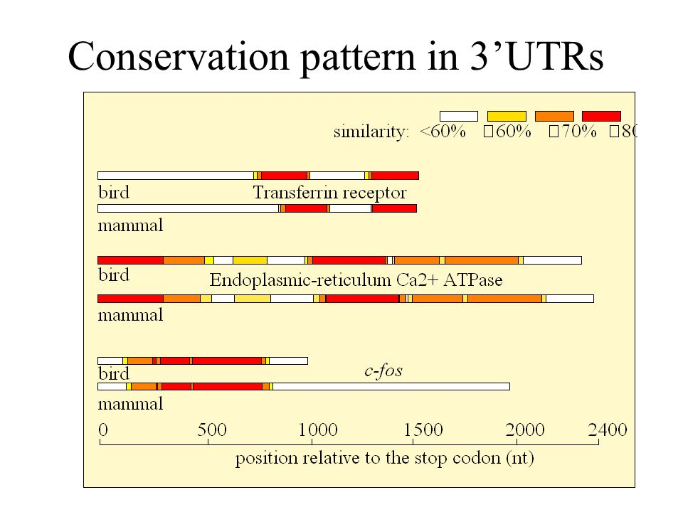 Conservation pattern in 3'UTRs