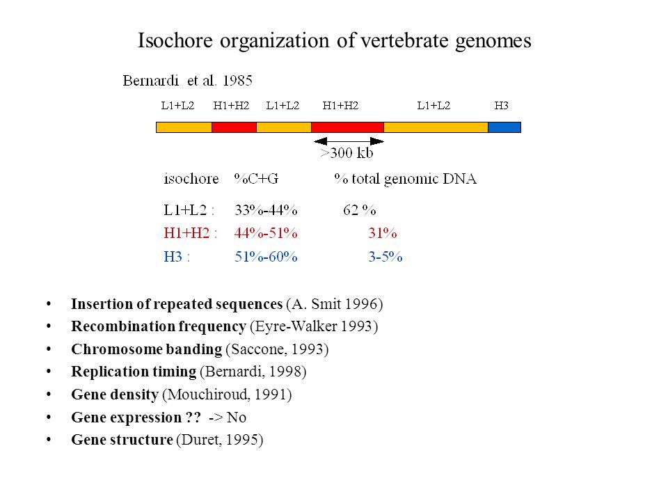 Isochore organization of vertebrate genomes