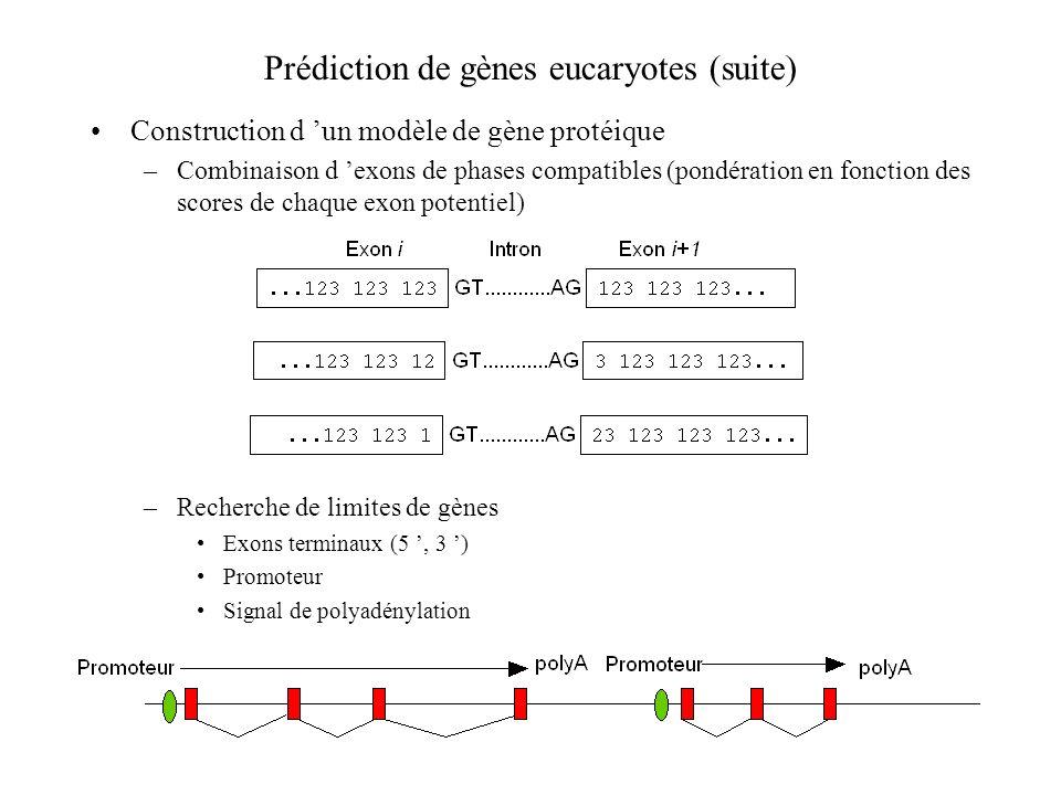 Prédiction de gènes eucaryotes (suite)