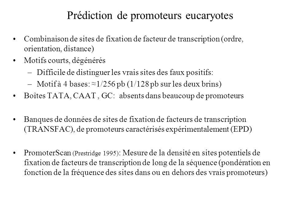 Prédiction de promoteurs eucaryotes