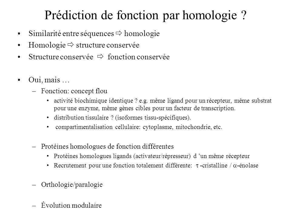 Prédiction de fonction par homologie
