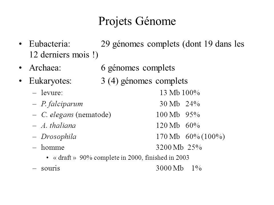 Projets Génome Eubacteria: 29 génomes complets (dont 19 dans les 12 derniers mois !) Archaea: 6 génomes complets.