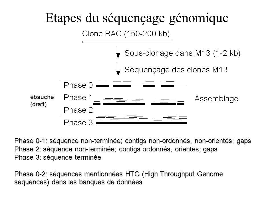 Etapes du séquençage génomique