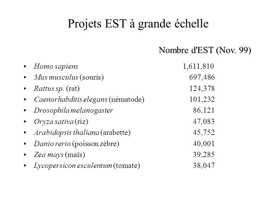 Projets EST à grande échelle