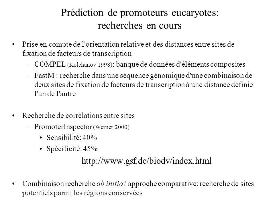 Prédiction de promoteurs eucaryotes: recherches en cours