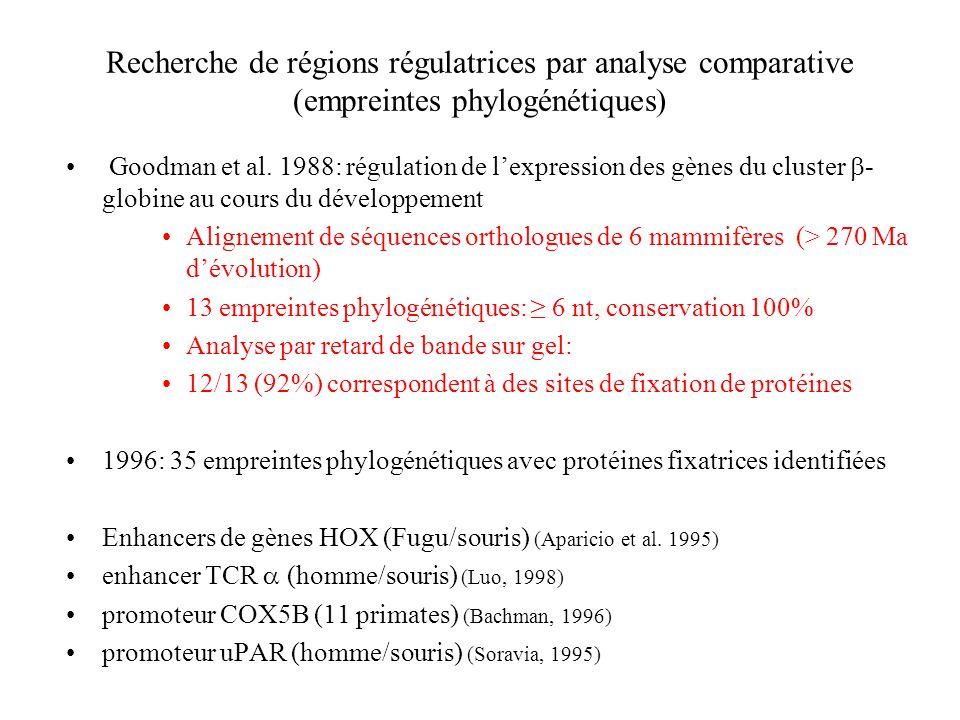 Recherche de régions régulatrices par analyse comparative (empreintes phylogénétiques)