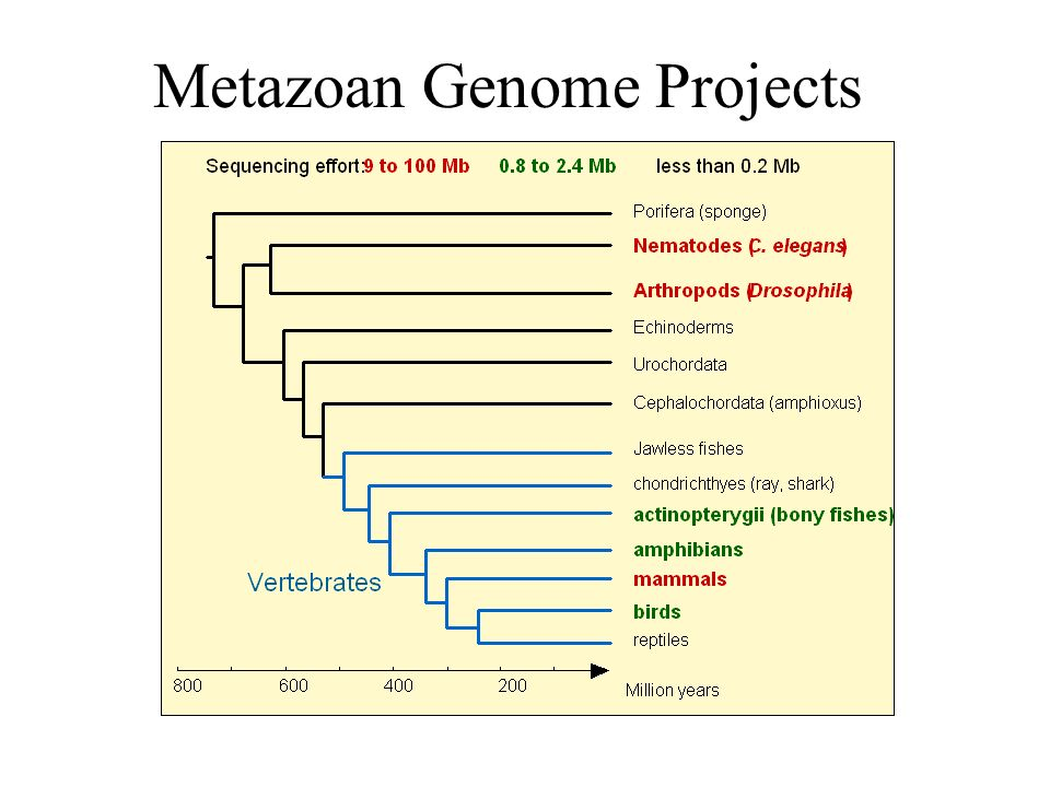 Metazoan Genome Projects