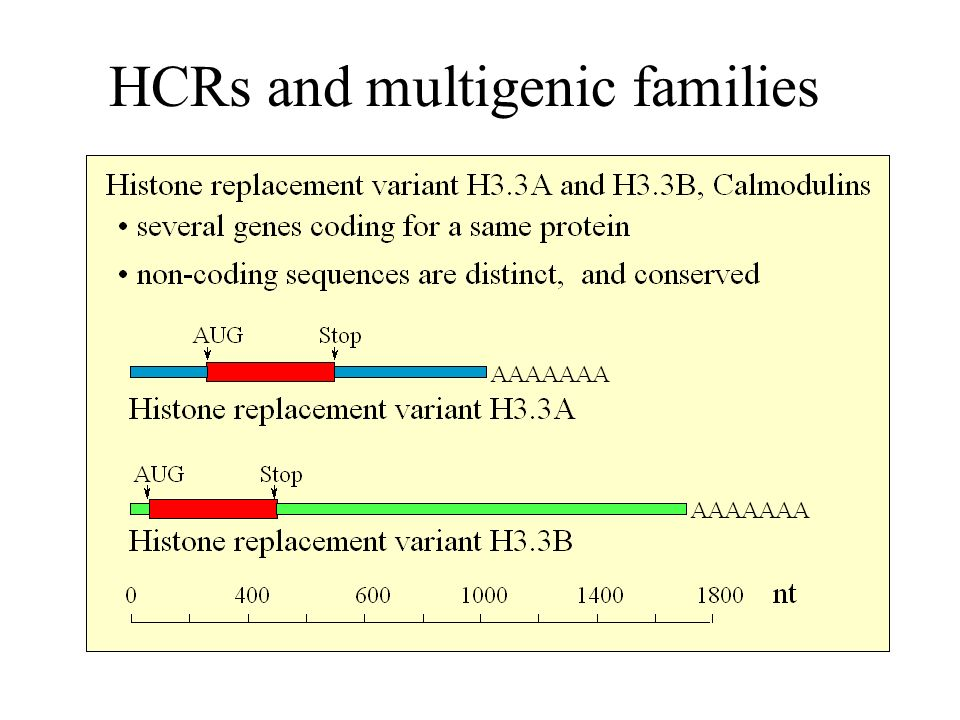 HCRs and multigenic families