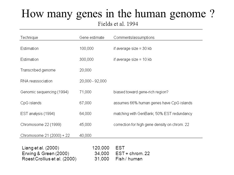 How many genes in the human genome Fields et al. 1994