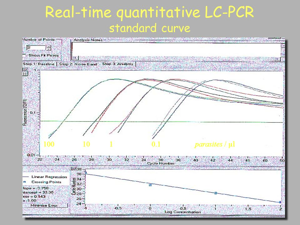 Real-time quantitative LC-PCR