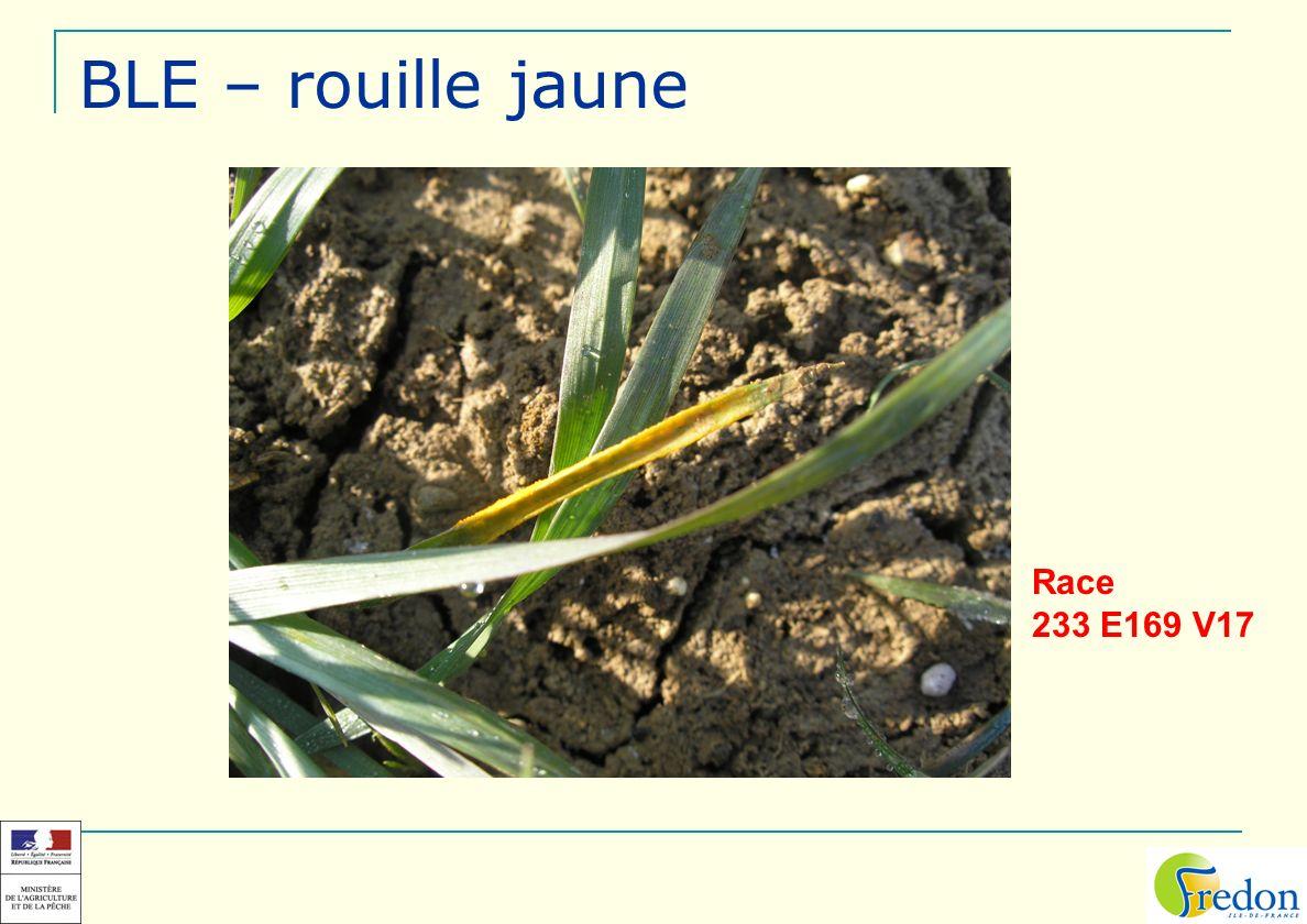 BLE – rouille jaune Race 233 E169 V17
