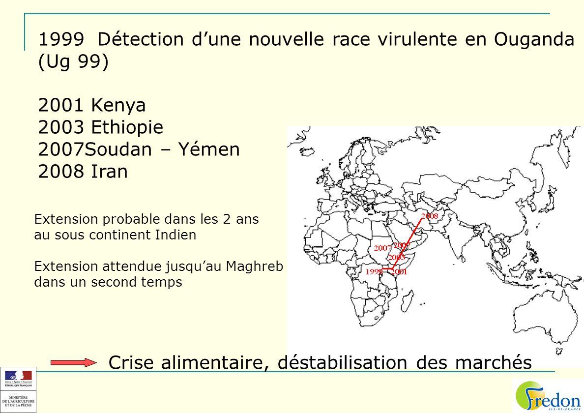 Détection d'une nouvelle race virulente en Ouganda (Ug 99) 2001 Kenya
