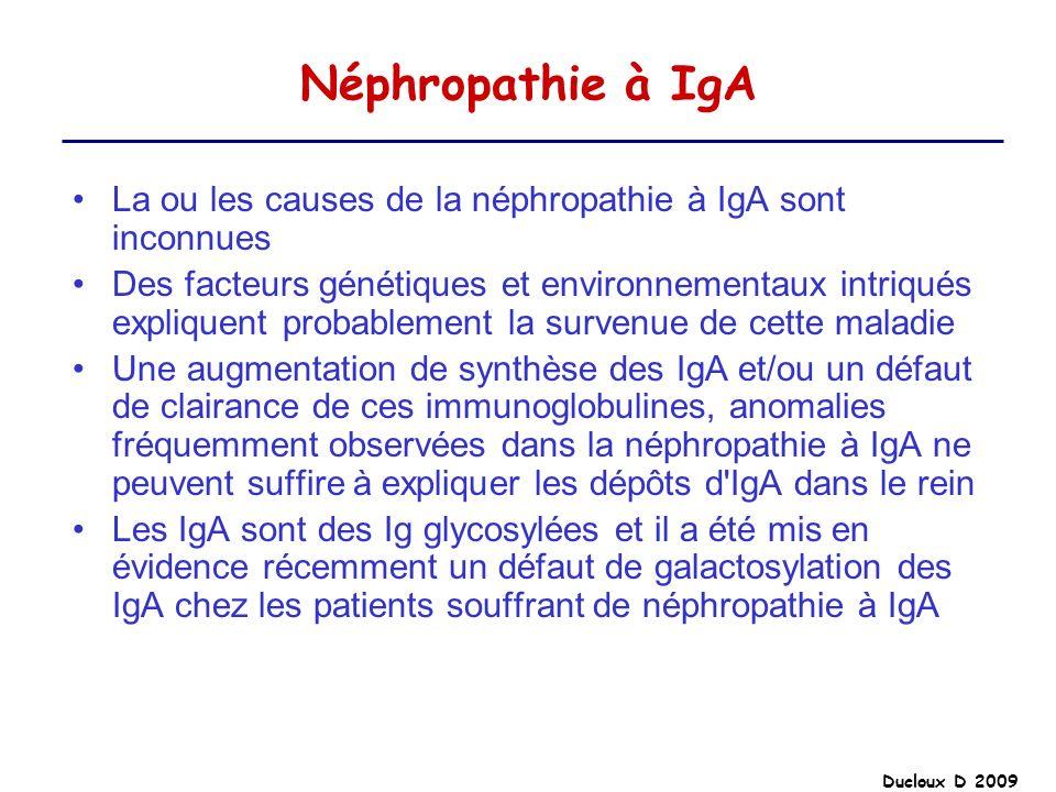 Néphropathie à IgALa ou les causes de la néphropathie à IgA sont inconnues.