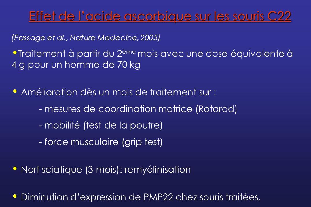 Effet de l'acide ascorbique sur les souris C22