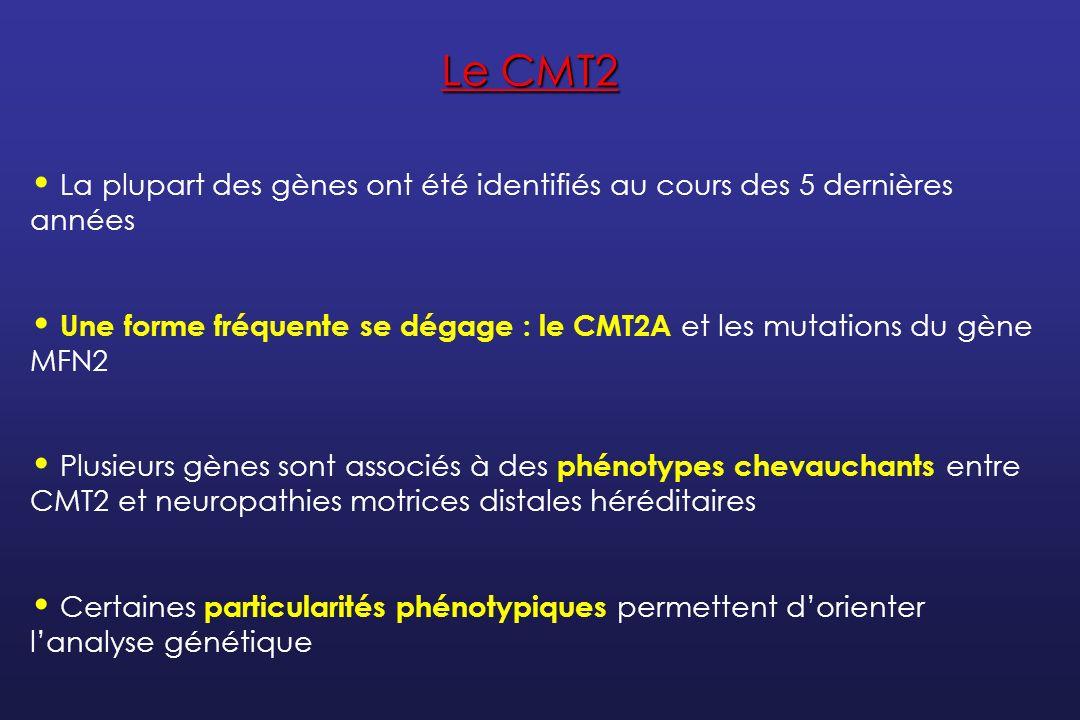 Le CMT2 La plupart des gènes ont été identifiés au cours des 5 dernières années.