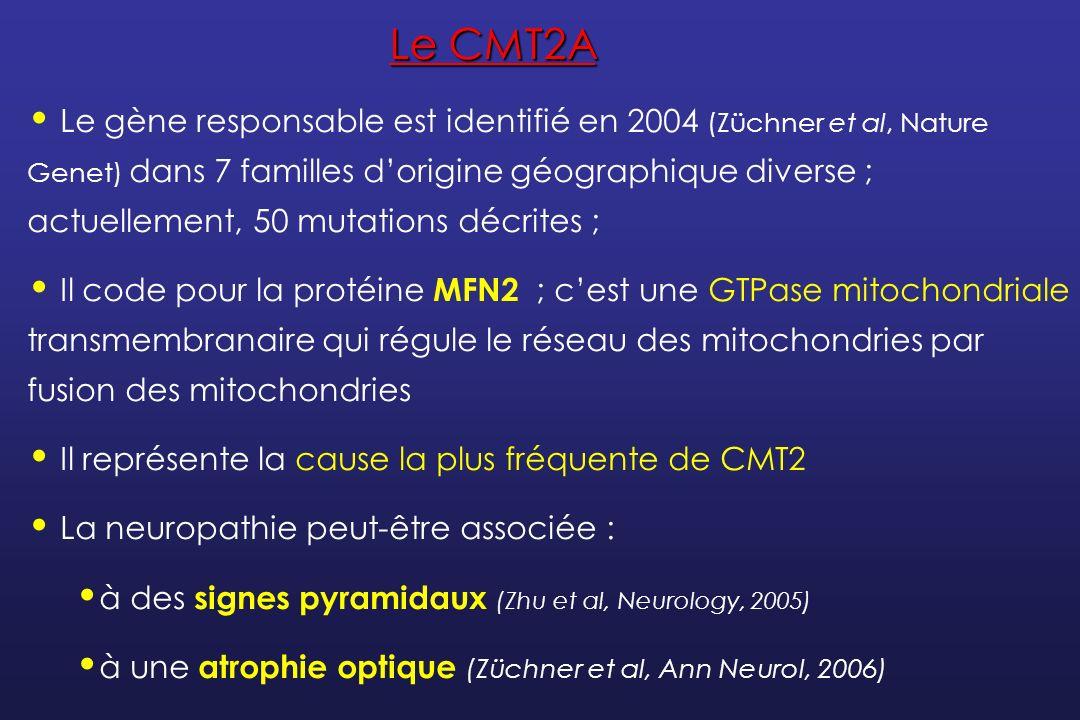 Le CMT2A