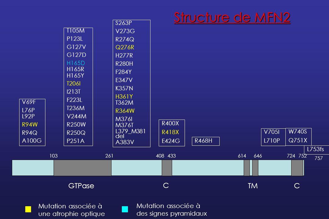Structure de MFN2 GTPase C TM C