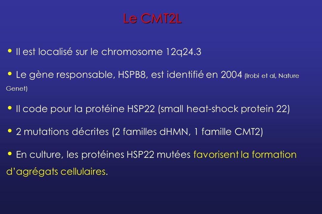 Le CMT2L Il est localisé sur le chromosome 12q24.3