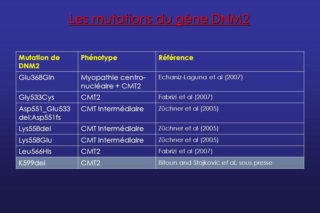 Les mutations du gène DNM2