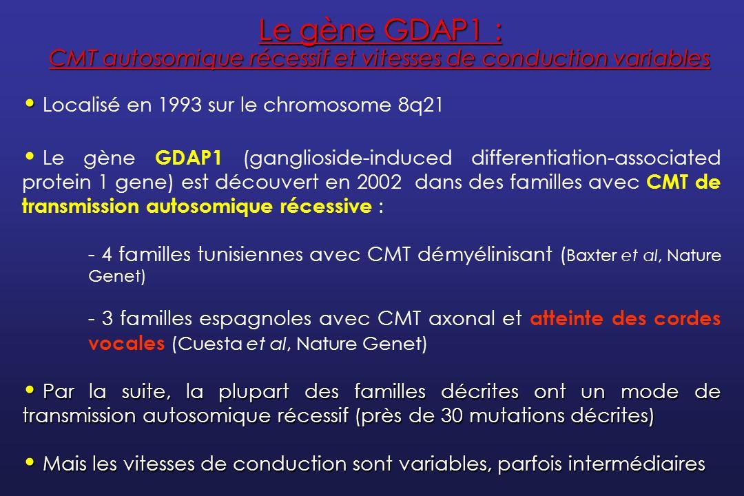 Le gène GDAP1 : CMT autosomique récessif et vitesses de conduction variables