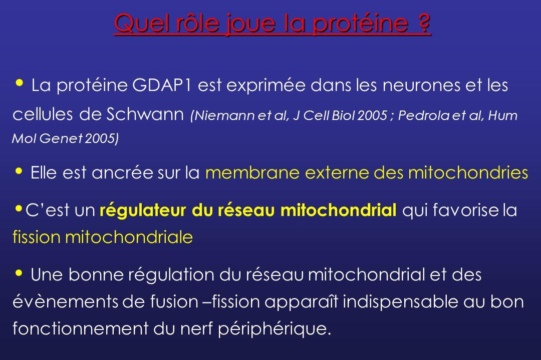 myopathie mitochondriale forum