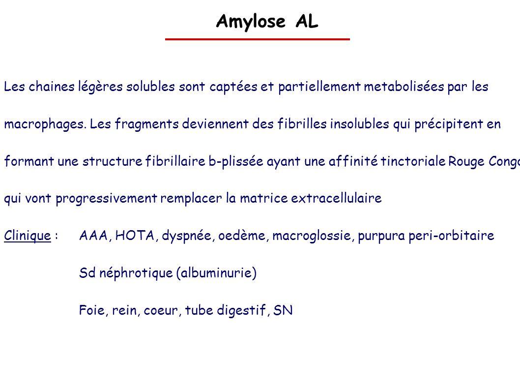 Amylose AL Les chaines légères solubles sont captées et partiellement metabolisées par les.