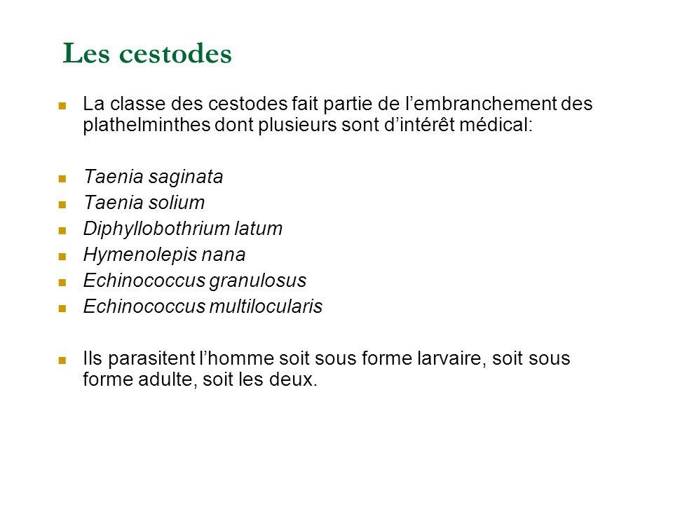 Les cestodes La classe des cestodes fait partie de l'embranchement des plathelminthes dont plusieurs sont d'intérêt médical: